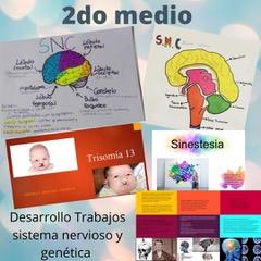 Sistema Nervioso II° medio